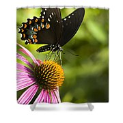 Spicebush Swallowtail Butterfly And Coneflower Shower Curtain