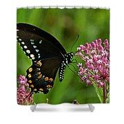 Spicebush Swallowtail Din039 Shower Curtain