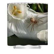 Spider In Narcissus Shower Curtain