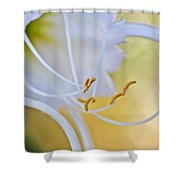 Spider Lily 2 Shower Curtain