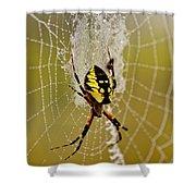 Spider Power Shower Curtain