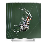 Spider - The Spinner Shower Curtain