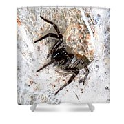 Spiders Trap Shower Curtain