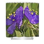 Spiderwort 2273 Shower Curtain