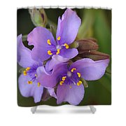 Spiderwort Shower Curtain