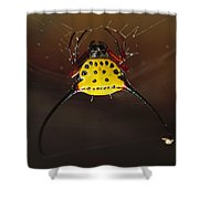 Spiked Spider Gasteracantha Sp In Web Shower Curtain