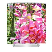 Spikes Of Pink Foxgloves Shower Curtain