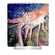 Spiney Lobster Shower Curtain
