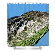 Spiny Chameleon Chamaeleo Verrucosus Shower Curtain