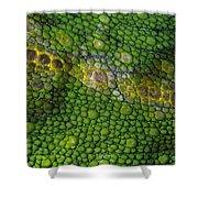 Spiny Desert Rhinoceros Chameleon Shower Curtain