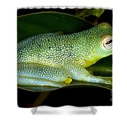 Spiny Glass Frog Shower Curtain
