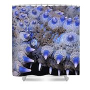 Spiny Starfish Marthasterias Glacialis Shower Curtain