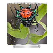Spinybacked Orbweaver Spider Solomon Shower Curtain