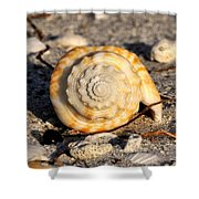 Spirals From The Sea Shower Curtain