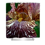 Splashed Iris Shower Curtain