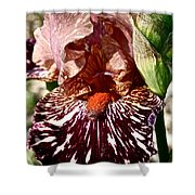 Splattered Iris Shower Curtain