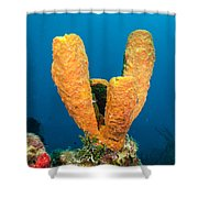 Sponge Trio Shower Curtain
