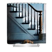 Spooked Cat By Stairs Shower Curtain