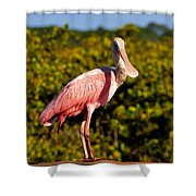Spoonbill Shower Curtain by David Lee Thompson
