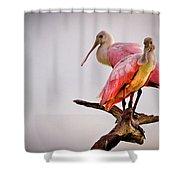 Spoonbills Shower Curtain