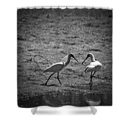 Spoonbills Shower Curtain