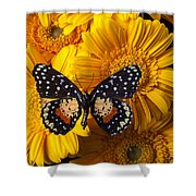 Spotted Butterfly On Yellow Mums Shower Curtain