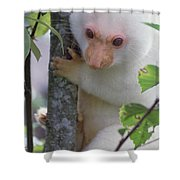 Spotted Cuscus Phalanger Maculatus Shower Curtain