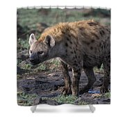 Spotted Hyena Shower Curtain