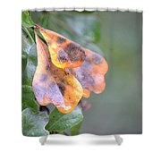 Spotted Oak Leaves In Autumn Shower Curtain