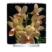 Spotted Orchids Shower Curtain