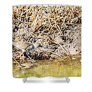 Spotted Sandpiper At The Canal Shower Curtain