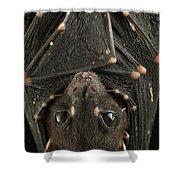 Spotted-winged Fruit Bat Balionycteris Shower Curtain