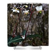 Spotted Wintergreen Plants Shower Curtain