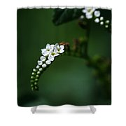 Spray Of White Flowers Shower Curtain