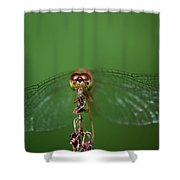 Spread Your Wings And Fly Away Shower Curtain