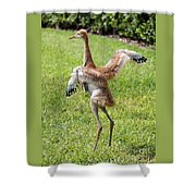 Spread Your Wings And Try To Fly Shower Curtain