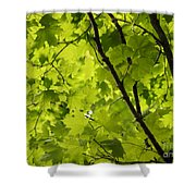 Spring - Beneath The Great Maple Shower Curtain
