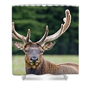Spring Antlers Shower Curtain