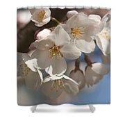 Spring Blooming Yoshino Cherry Tree Shower Curtain