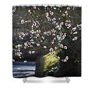 Spring Blossom Shower Curtain