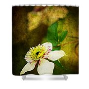 Spring Charm Shower Curtain by Darren Fisher