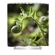 Spring Fern Shower Curtain