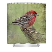 Spring Finch Shower Curtain
