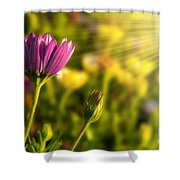 Spring Flower Shower Curtain by Carlos Caetano