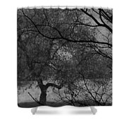 Spring For Leaves  Shower Curtain
