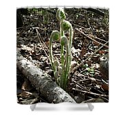 Spring Forest Fern Shower Curtain
