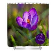 Spring Glow Shower Curtain