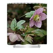Spring Hellabore Shower Curtain