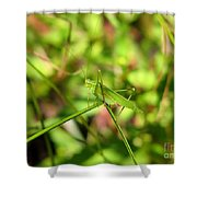 Spring Hopper Shower Curtain