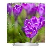 Spring In The Garden Shower Curtain